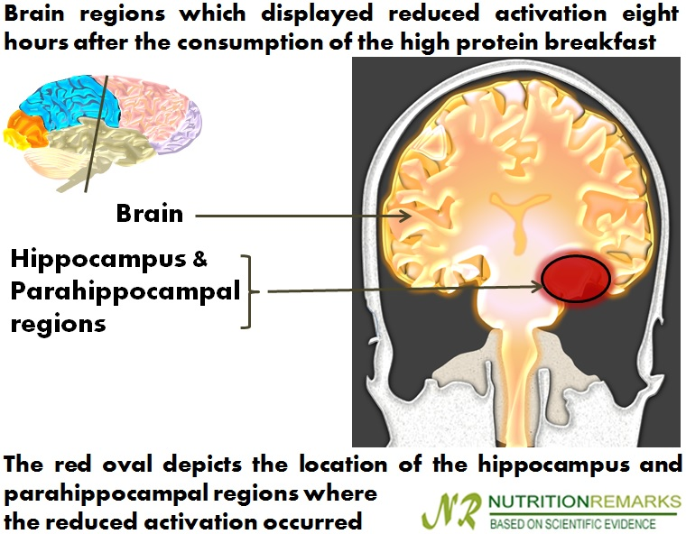 Brain regions which displayed reduced activation eight hours after the consumption of the high protein breakfast