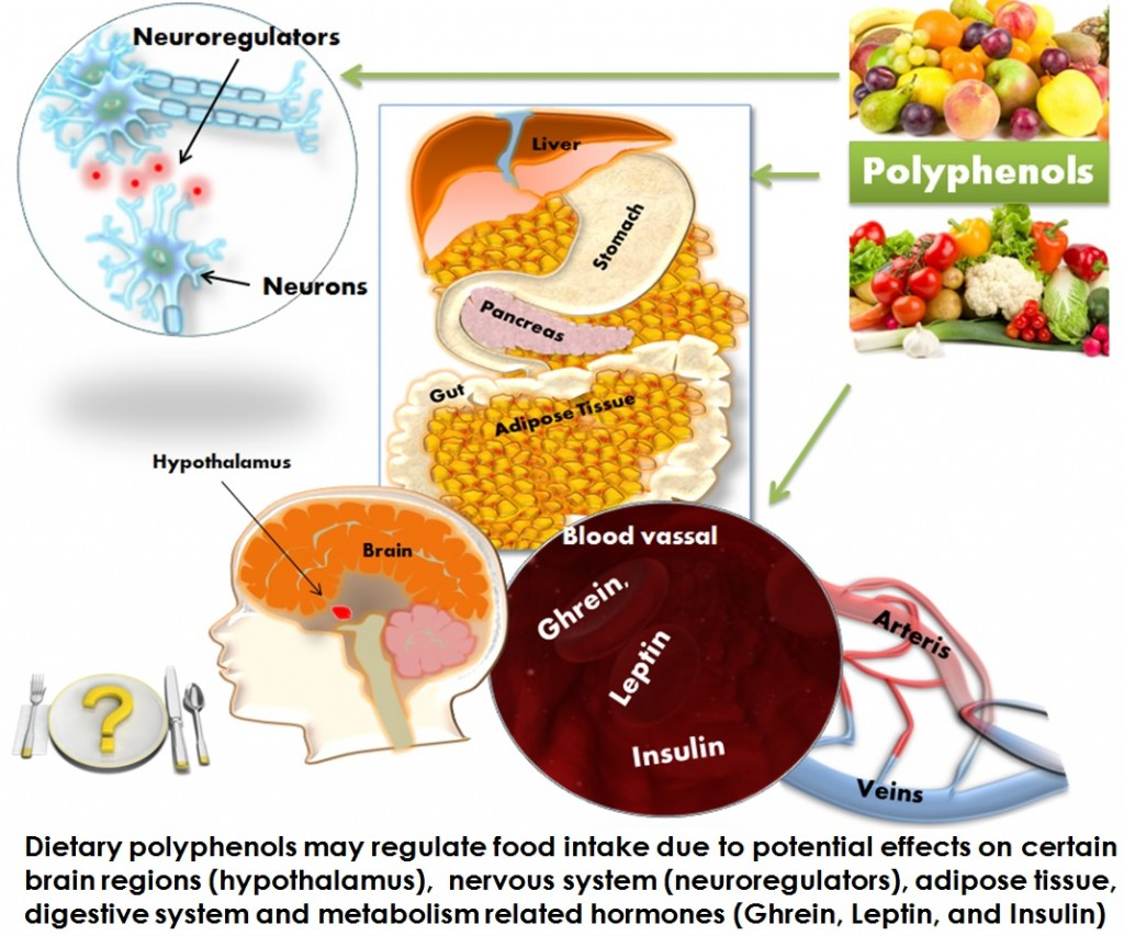 Polyphenols in your diet may regulate food intake